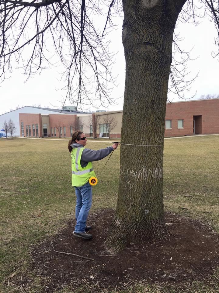 Highland Tree Inventory